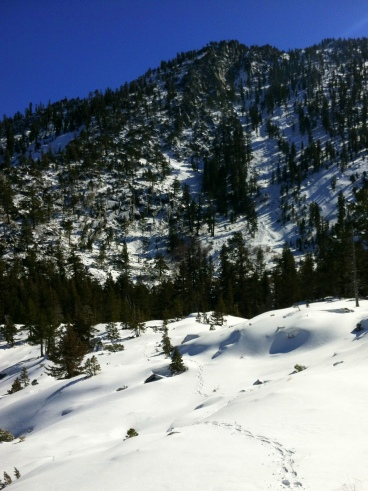 Pleasant interlude of actual snowshoeing.